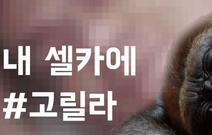 [영상] 인공지능이 내 사진을 #고릴라로 인식한다면?!